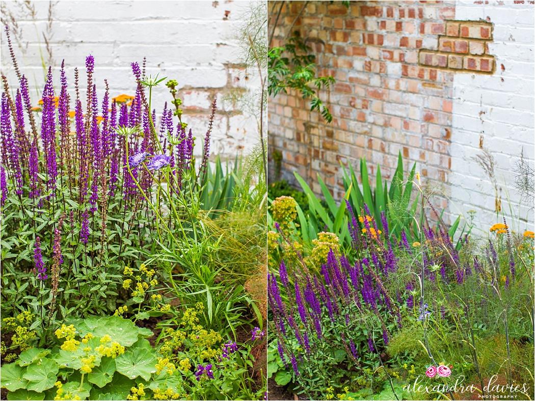 South London garden