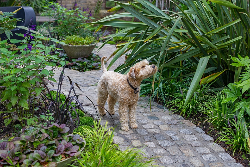 a dog friendly garden